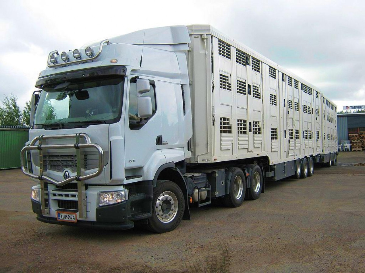 España pone en marcha un plan para controlar la temperatura en los transportes de animales vivos por carretera