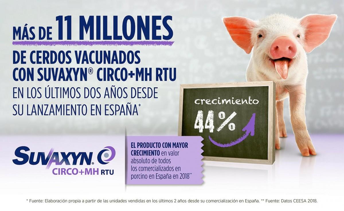 vacunas circovirus porcino
