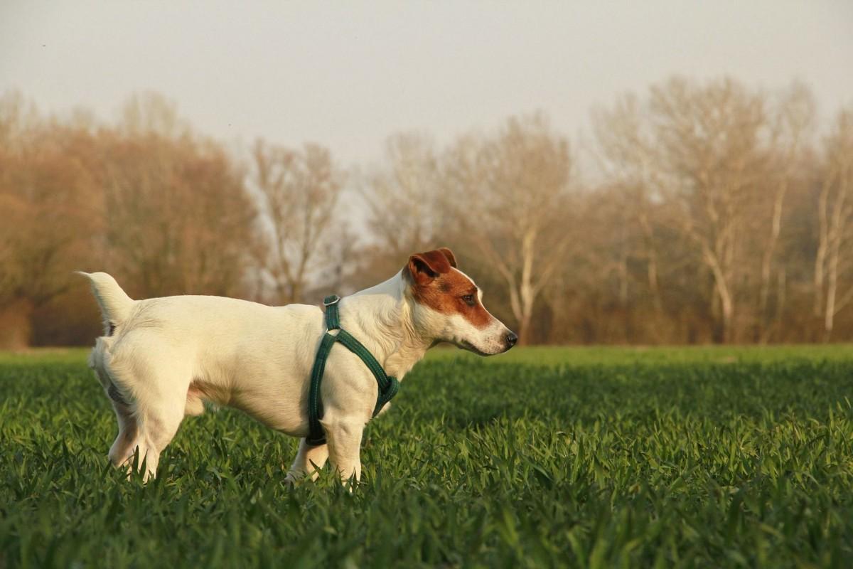 Bilirrubina directa alta en perros