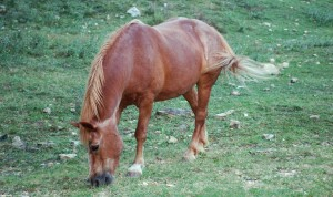 incomodidad del portal del caballo